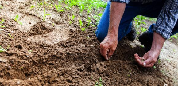 Kitostim, pour entretenir son jardin avec un produit naturel et ses plantes sans produits chimiques, sans pesticides